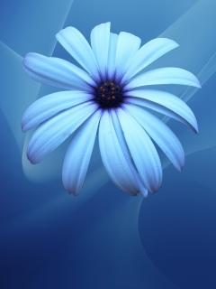 Ещё одна картинка на природную тематику. Цветок на голубом фоне.