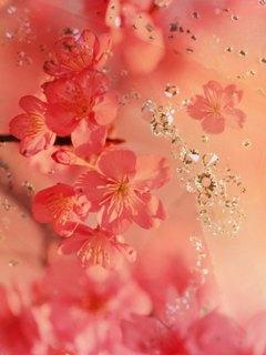Красивая заставка в красно-розовых тонах с разрешением 240 на 320 пикселей.